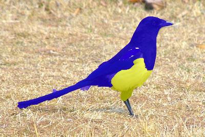 bird28-1